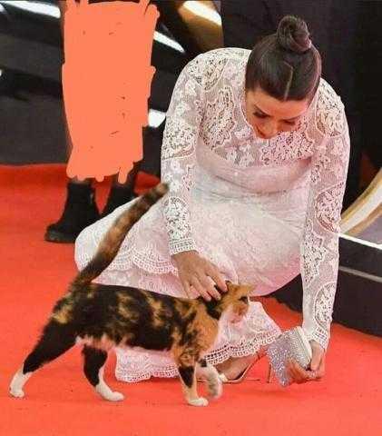 تسميم «قطة مهرجان القاهرة» يشعل السوشيال ودار الأوبرا ترد