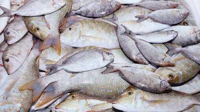 أسعار الأسماك اليوم.. البورى يتراوح بين 42 – 50 جنيهًا