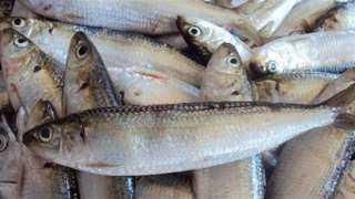 أسعار الأسماك اليوم الأربعاء 21 يوليو 2021