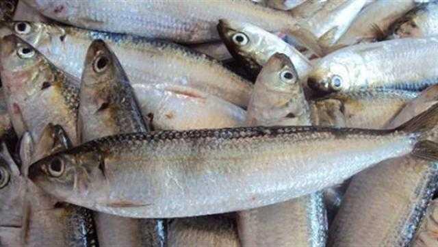 أسعار الأسماك اليوم الجمعة 30 يوليو 2021