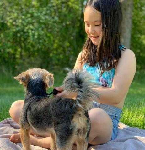 كلبة تعطي العالم درسا في الوفاء.. تنقذ مالكتها من هجوم ذئب بري بكندا