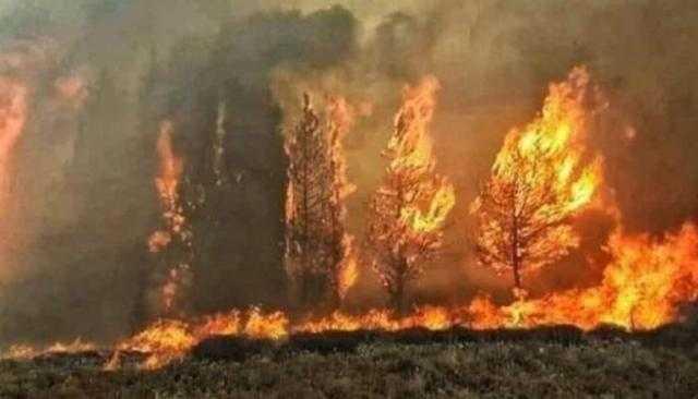لبنان تحترق.. اتساع حرائق غابات بيروت.. والوضع «خرج عن السيطرة».. فيديو