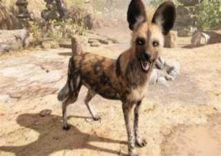 قرار عاجل من بيطري المنيا بعد هجوم حيوان مفترس علي القرى ملوي