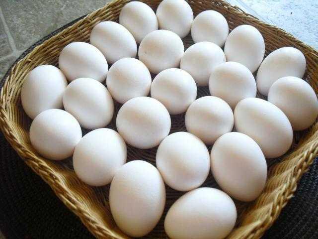تراجع أسعار البيض اليوم الثلاثاء 26 أكتوبر 2021