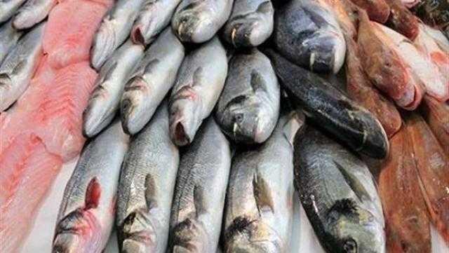استقرار أسعار الأسماك اليوم الثلاثاء 26 أكتوبر.. تراجع البلطي